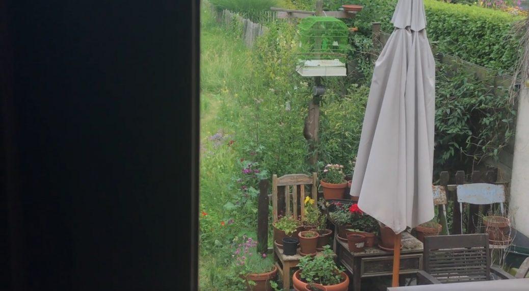 De rat in de tuin