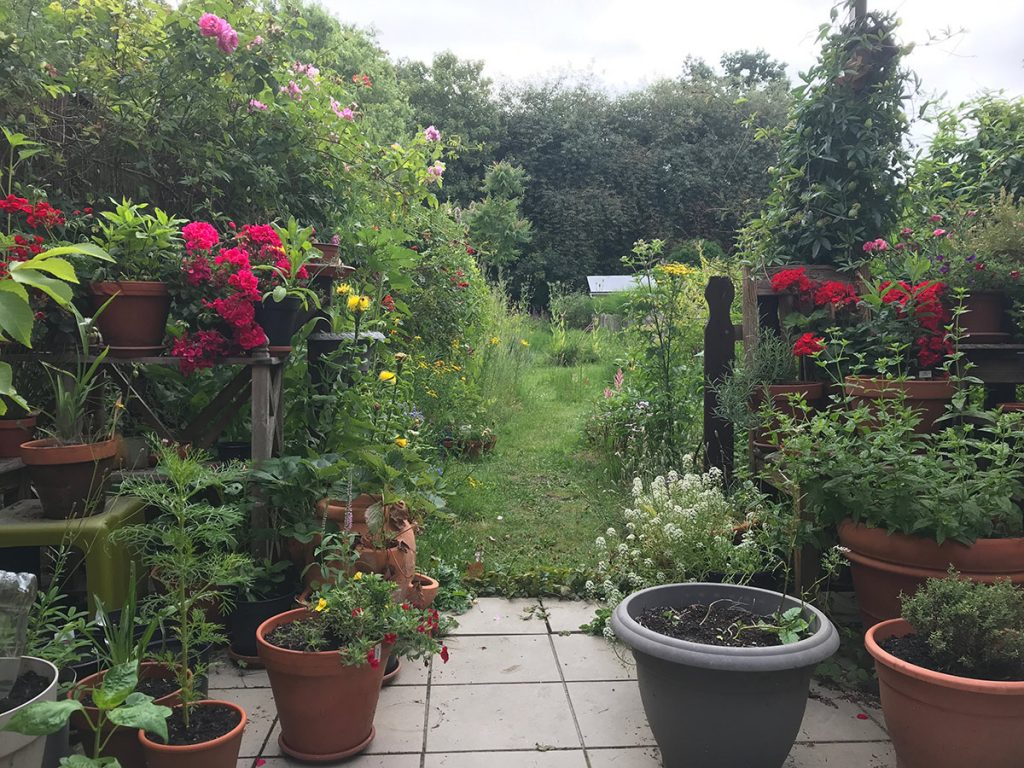 Afbeelding van een tuin